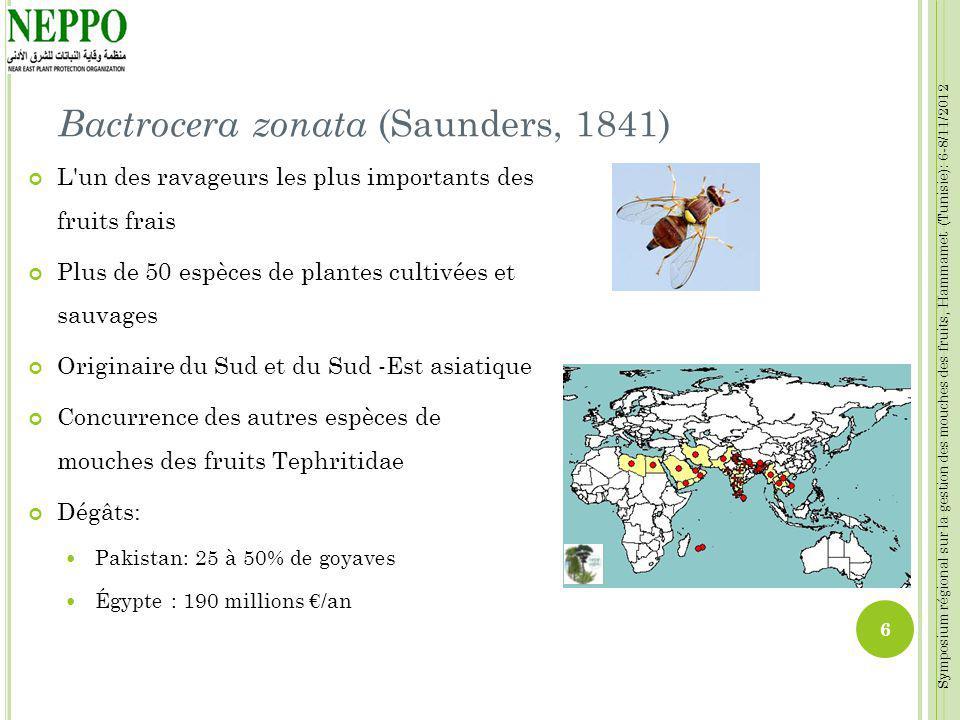 Bactrocera zonata (Saunders, 1841)