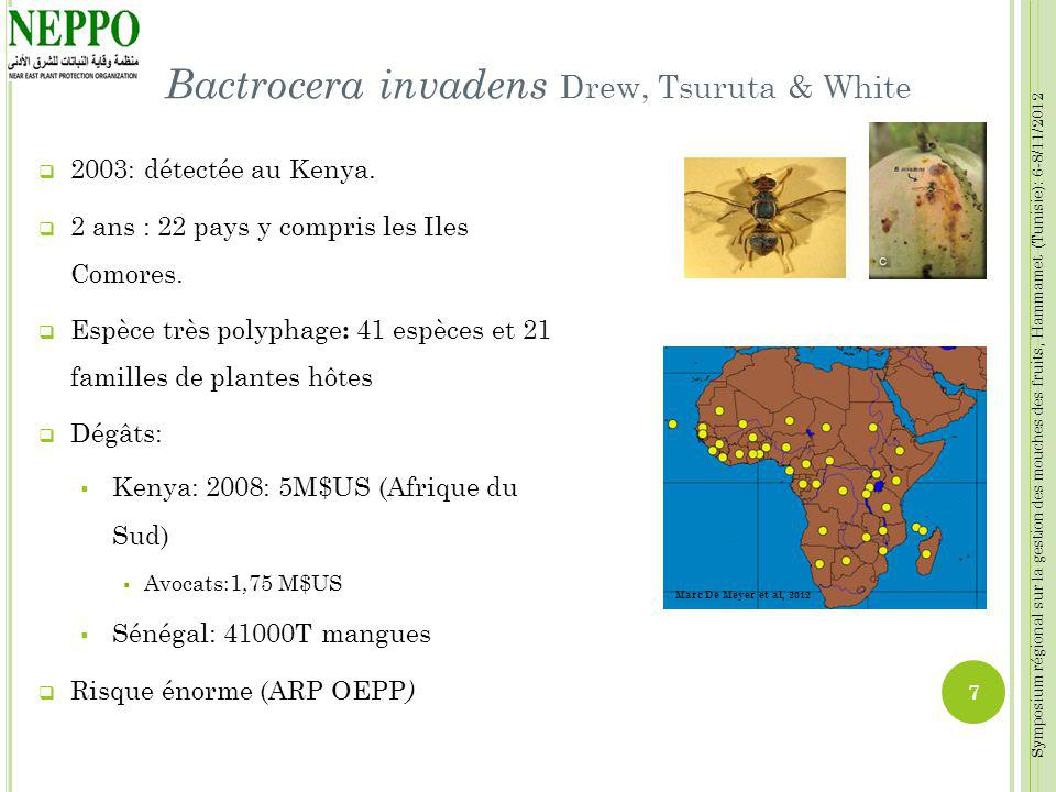 Bactrocera invadens Drew, Tsuruta & White