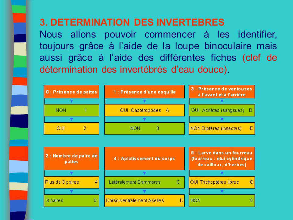 3. DETERMINATION DES INVERTEBRES