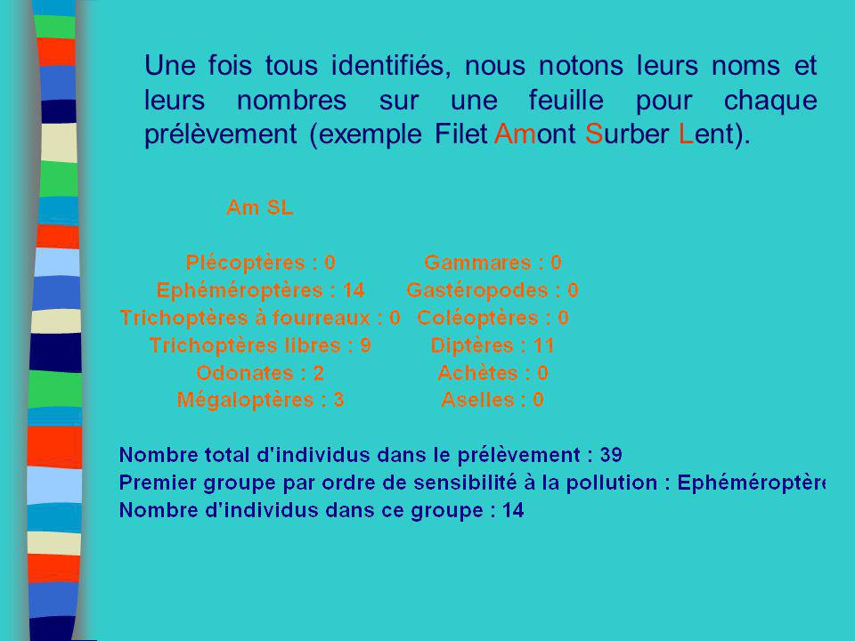 Une fois tous identifiés, nous notons leurs noms et leurs nombres sur une feuille pour chaque prélèvement (exemple Filet Amont Surber Lent).