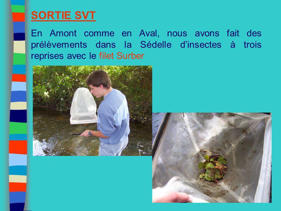 SORTIE SVT En Amont comme en Aval, nous avons fait des prélèvements dans la Sédelle d'insectes à trois reprises avec le filet Surber.
