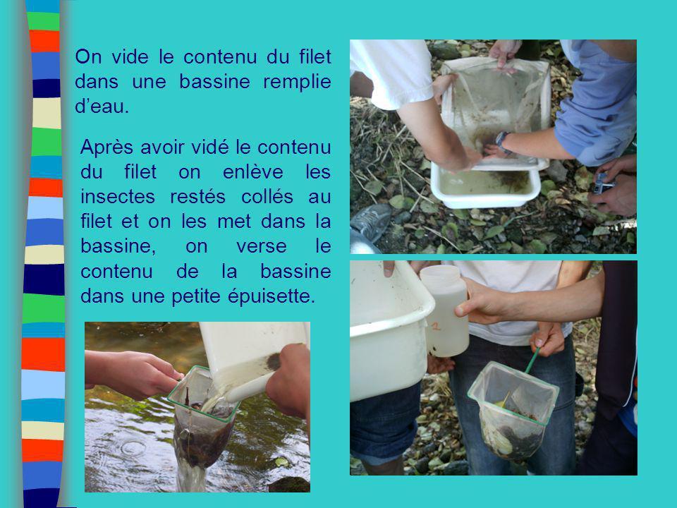 On vide le contenu du filet dans une bassine remplie d'eau.
