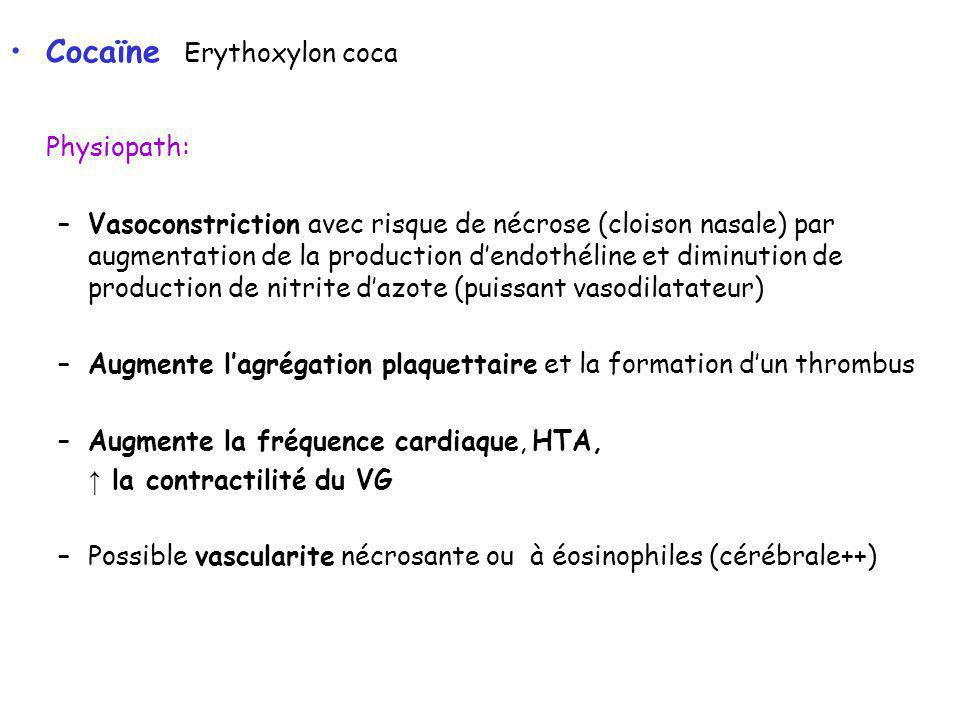 Cocaïne Erythoxylon coca