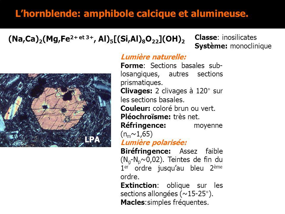 L'hornblende: amphibole calcique et alumineuse.