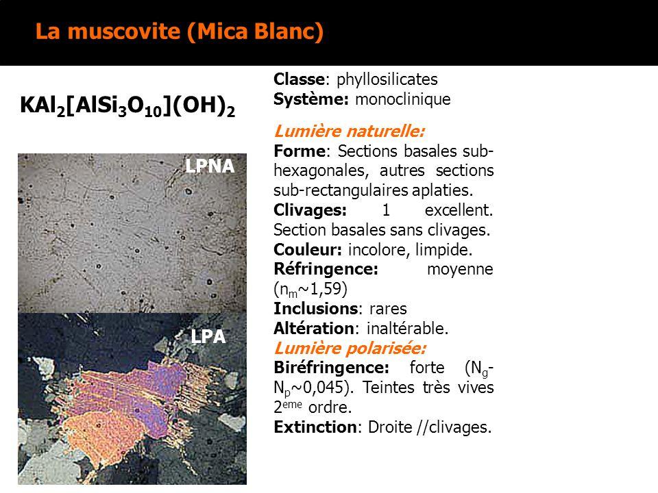 La muscovite (Mica Blanc)