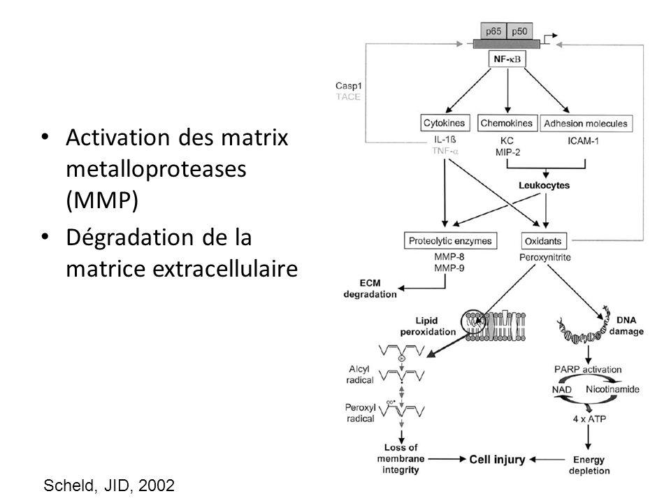 Activation des matrix metalloproteases (MMP)