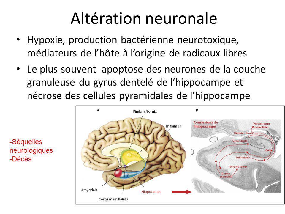 Altération neuronale Hypoxie, production bactérienne neurotoxique, médiateurs de l'hôte à l'origine de radicaux libres.