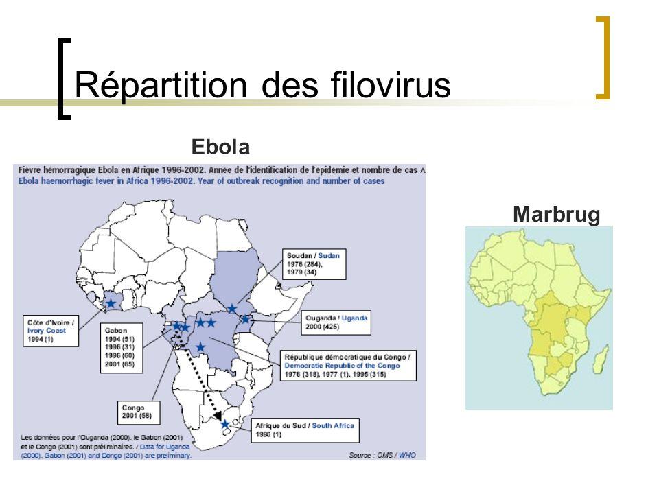 Répartition des filovirus