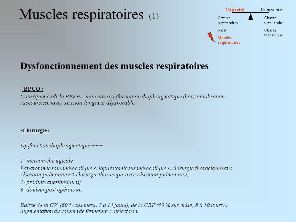 Muscles respiratoires (1)