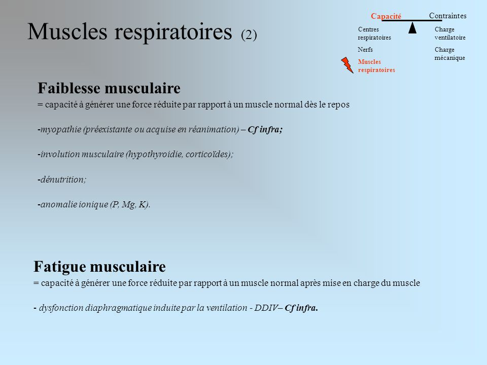Muscles respiratoires (2)