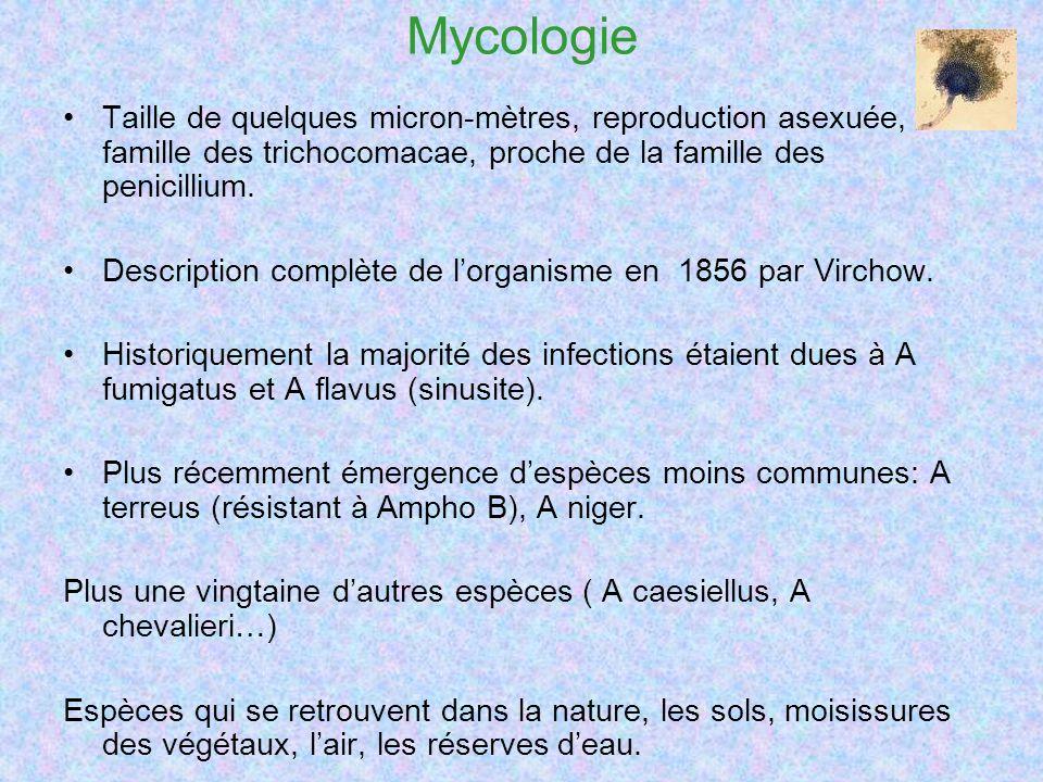 Mycologie Taille de quelques micron-mètres, reproduction asexuée, famille des trichocomacae, proche de la famille des penicillium.
