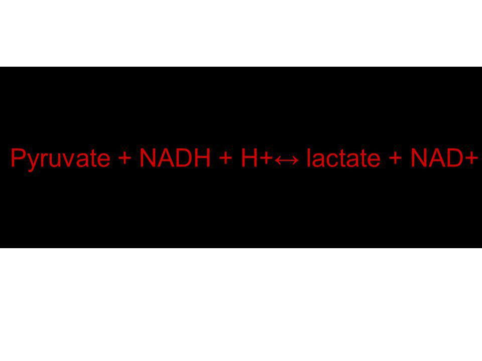 Pyruvate + NADH + H+↔ lactate + NAD+