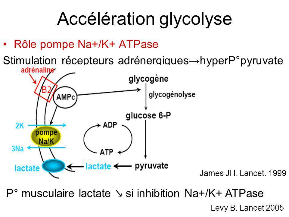 Accélération glycolyse