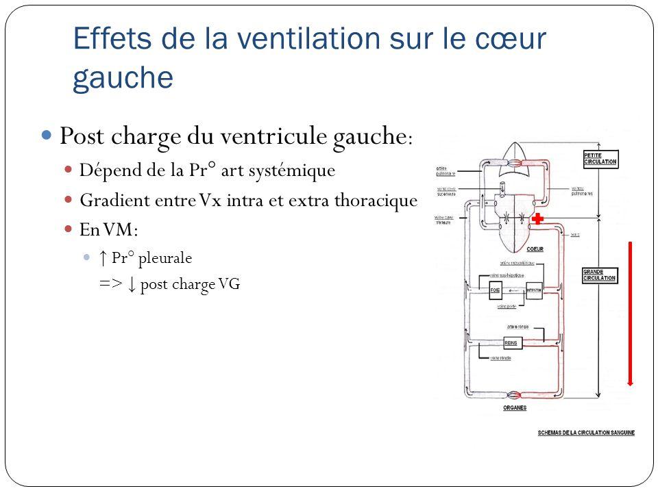 Effets de la ventilation sur le cœur gauche