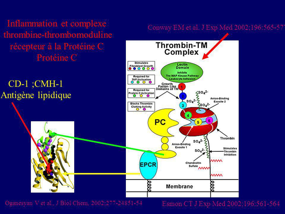 Inflammation et complexe thrombine-thrombomoduline