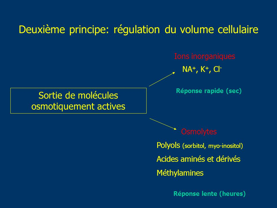 Deuxième principe: régulation du volume cellulaire