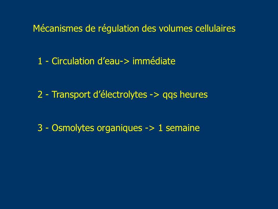 Mécanismes de régulation des volumes cellulaires
