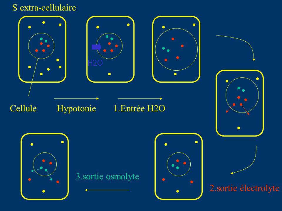 S extra-cellulaire Cellule Hypotonie 1.Entrée H2O 3.sortie osmolyte