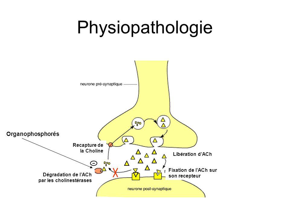 Physiopathologie Organophosphorés Recapture de la Choline