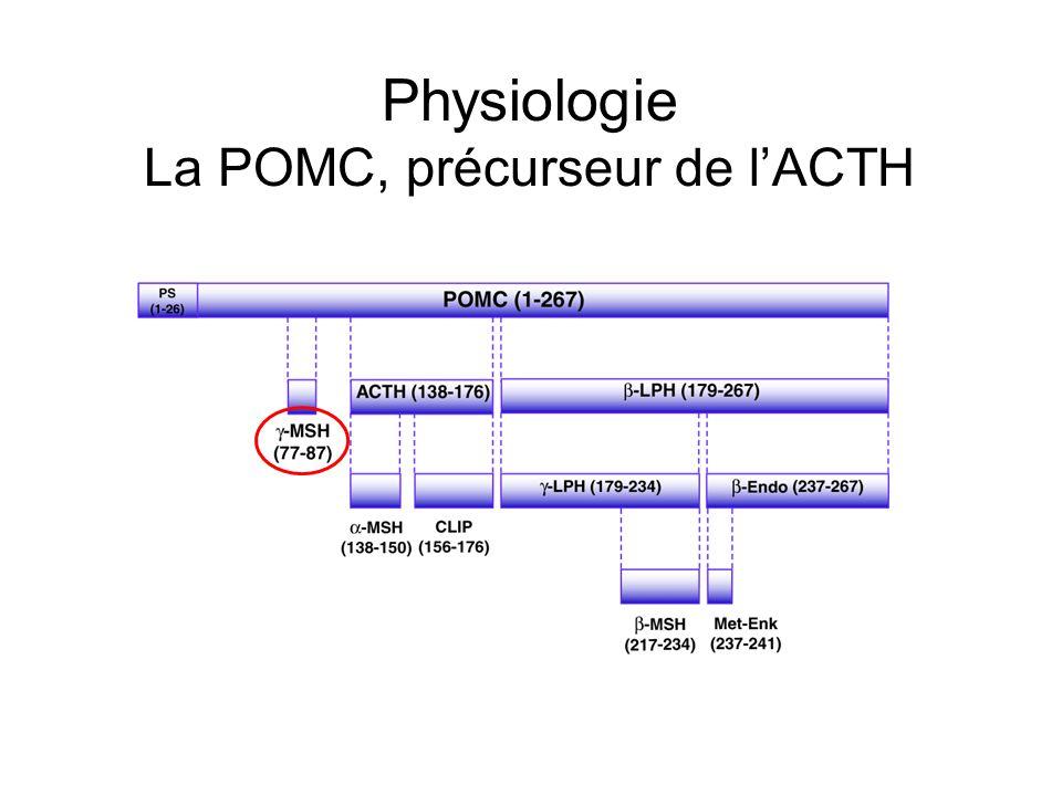 Physiologie La POMC, précurseur de l'ACTH