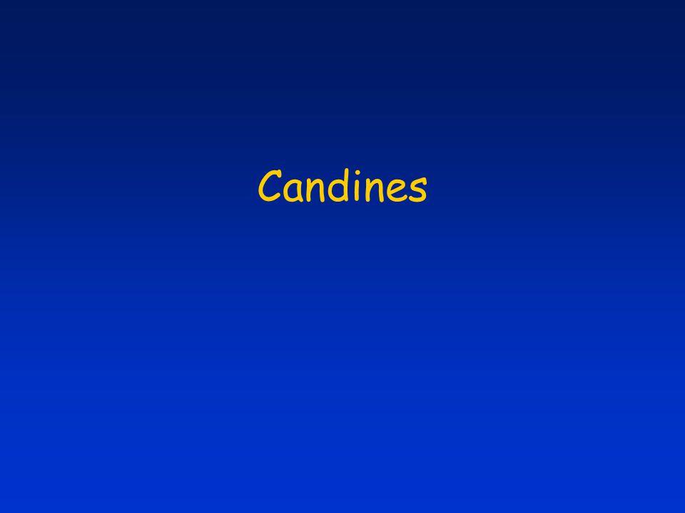 Candines