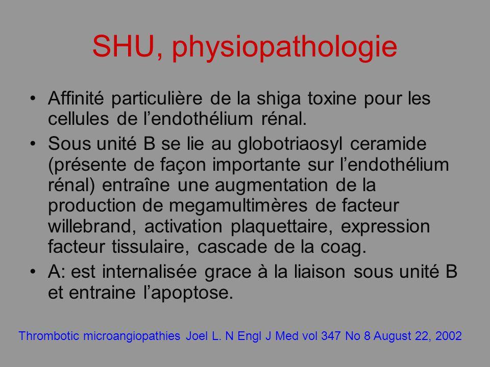 SHU, physiopathologie Affinité particulière de la shiga toxine pour les cellules de l'endothélium rénal.