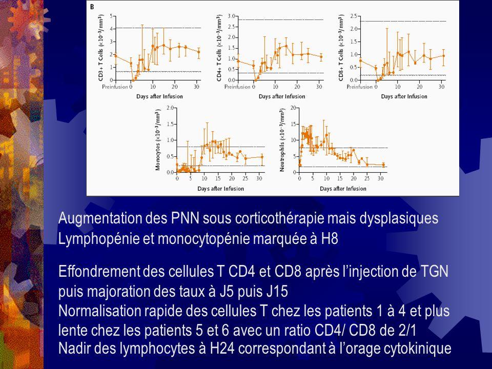 Augmentation des PNN sous corticothérapie mais dysplasiques