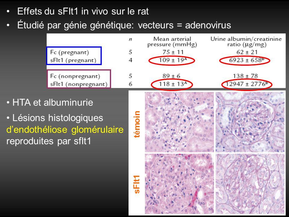 Effets du sFlt1 in vivo sur le rat