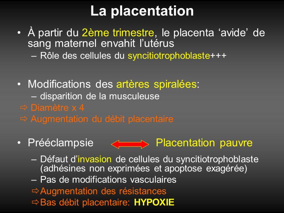 La placentation À partir du 2ème trimestre, le placenta 'avide' de sang maternel envahit l'utérus. Rôle des cellules du syncitiotrophoblaste+++