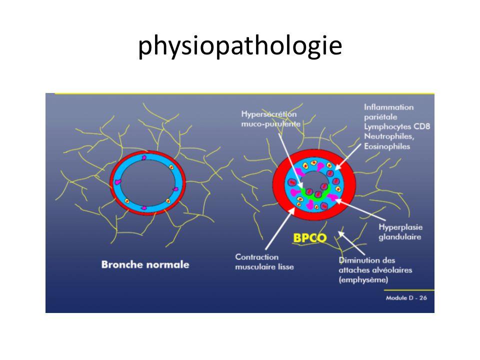 physiopathologie Inflammation chronique des bronches/ dim des attaches alvéolaires
