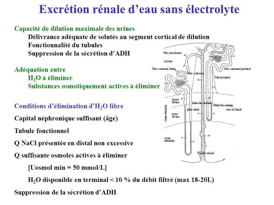 Excrétion rénale d'eau sans électrolyte