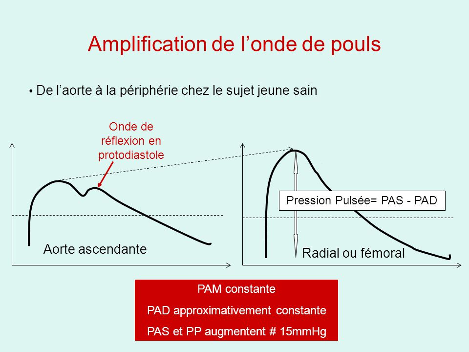 Amplification de l'onde de pouls