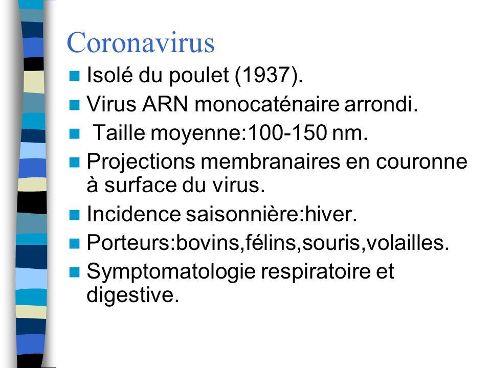 Coronavirus Isolé du poulet (1937). Virus ARN monocaténaire arrondi.