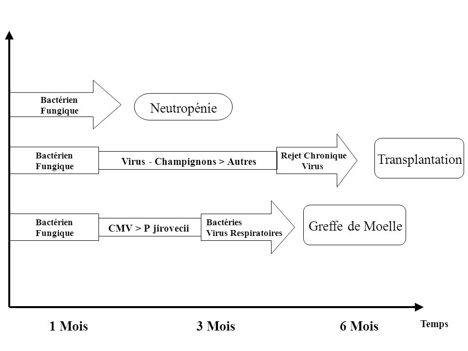 Neutropénie Transplantation Greffe de Moelle 1 Mois 3 Mois 6 Mois