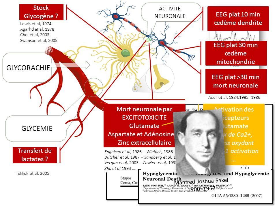 GLYCORACHIE GLYCEMIE Stock Glycogène EEG plat 10 min œdème dendrite