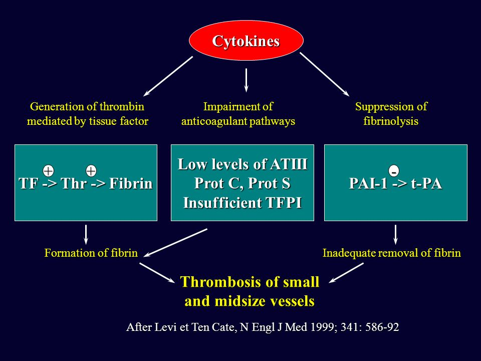 TF -> Thr -> Fibrin