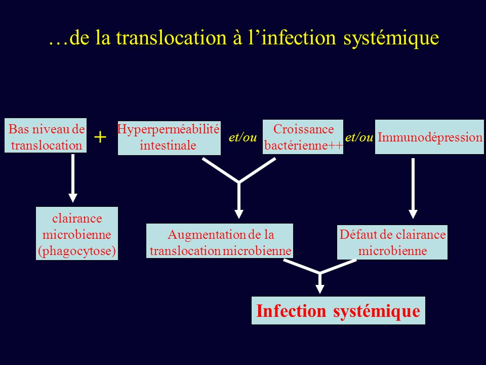 …de la translocation à l'infection systémique