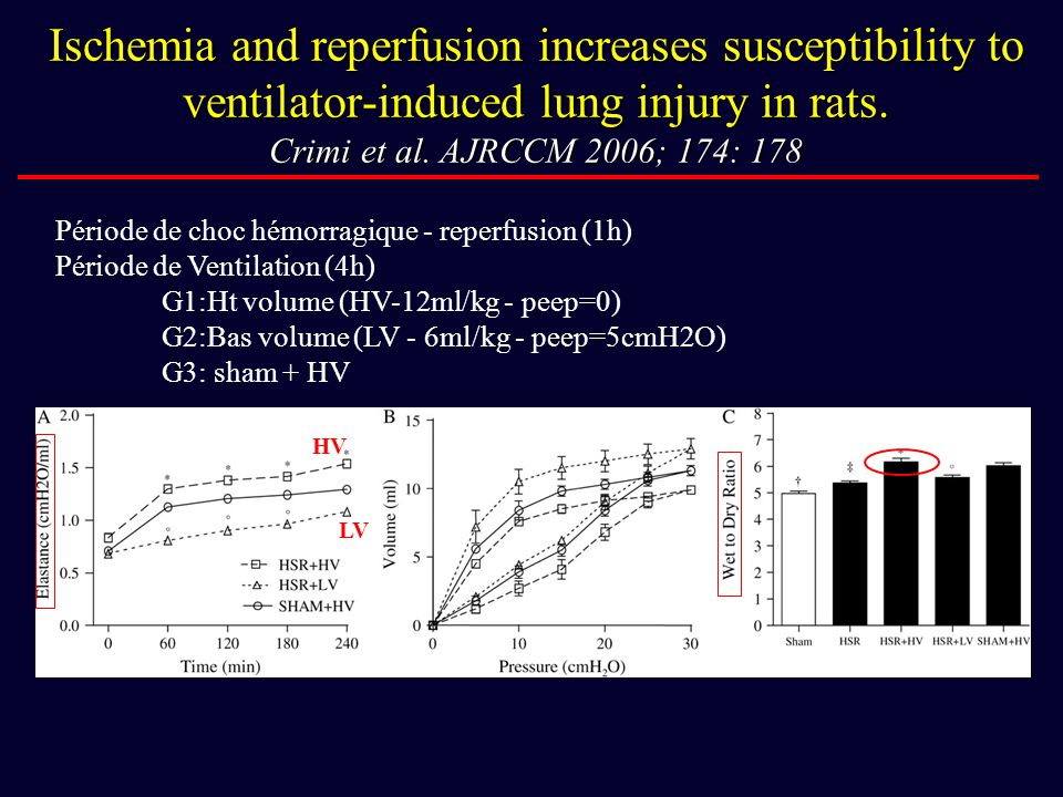 Ischemia and reperfusion increases susceptibility to ventilator-induced lung injury in rats. Crimi et al. AJRCCM 2006; 174: 178
