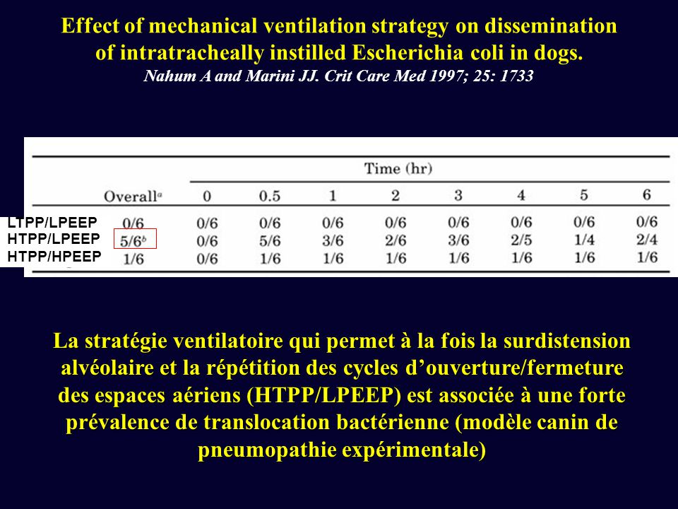 Effect of mechanical ventilation strategy on dissemination of intratracheally instilled Escherichia coli in dogs. Nahum A and Marini JJ. Crit Care Med 1997; 25: 1733