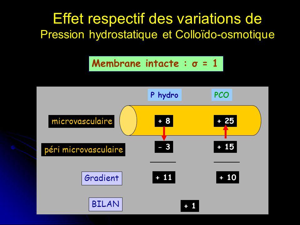 Effet respectif des variations de Pression hydrostatique et Colloïdo-osmotique
