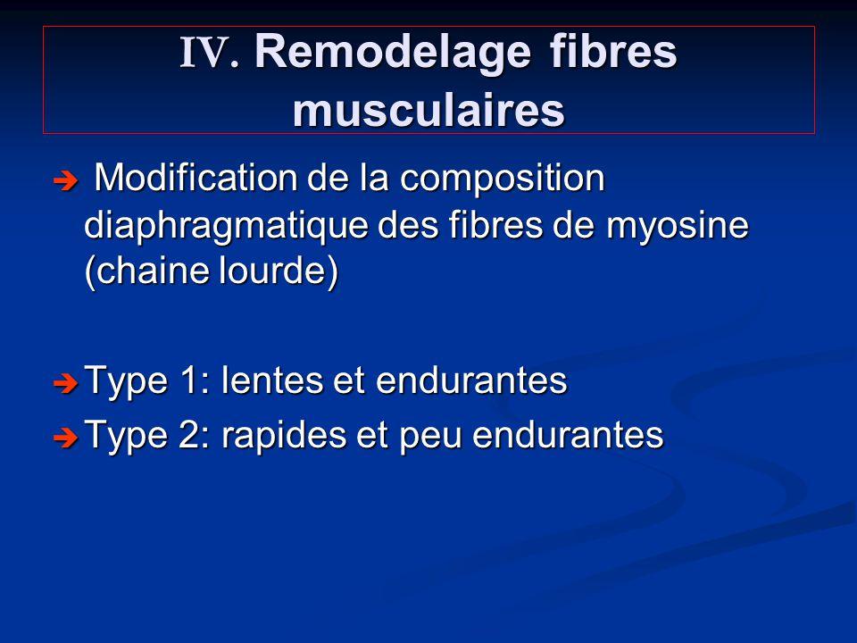 IV. Remodelage fibres musculaires