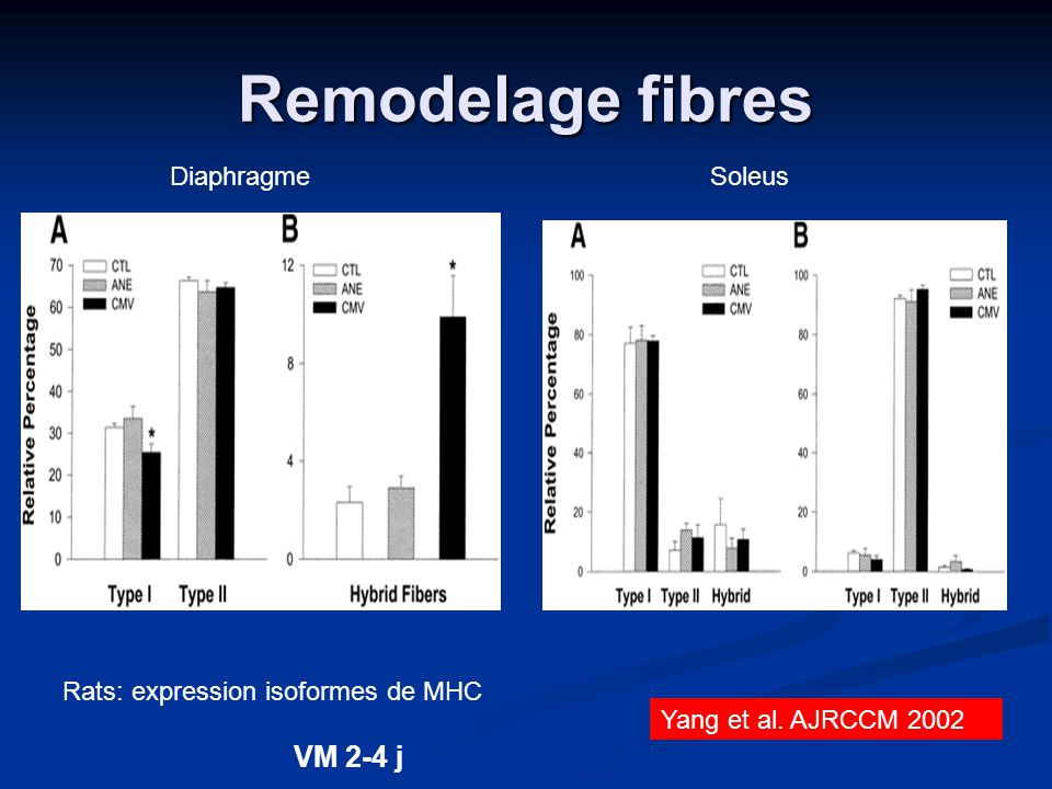 Remodelage fibres VM 2-4 j Diaphragme Soleus
