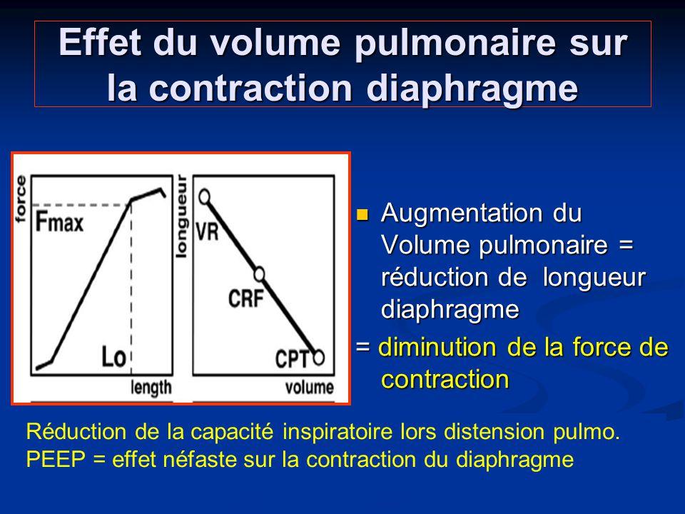 Effet du volume pulmonaire sur la contraction diaphragme