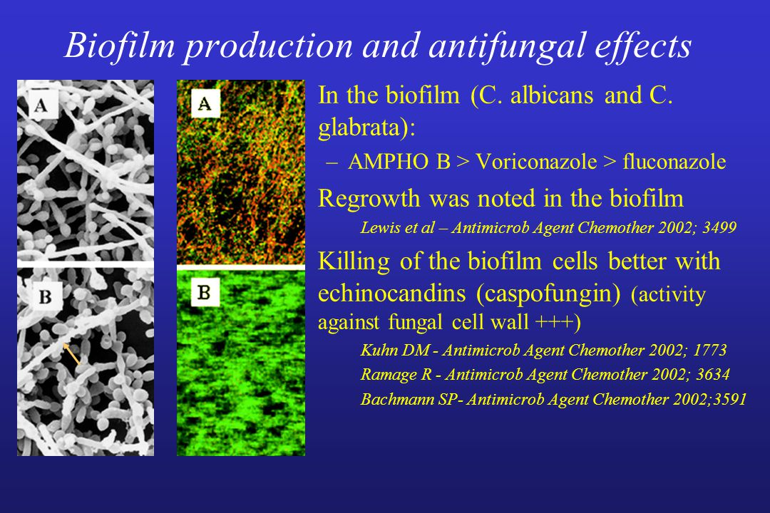 Biofilm production and antifungal effects