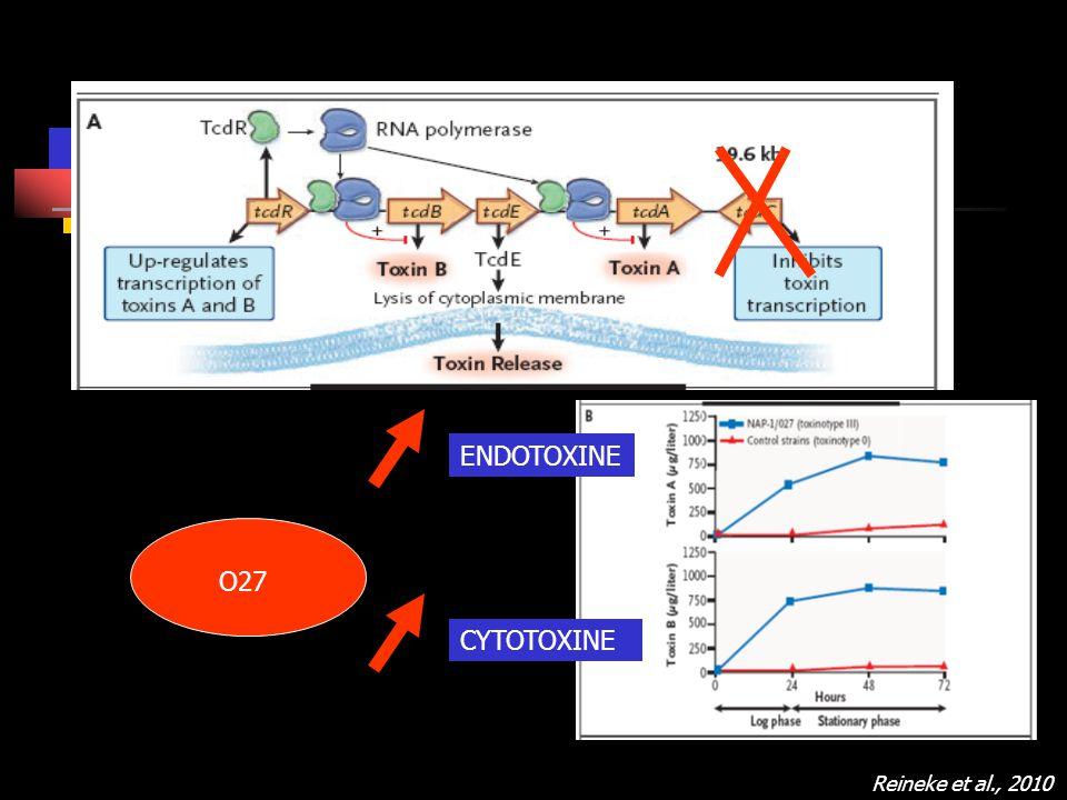 ENDOTOXINE O27 CYTOTOXINE Reineke et al., 2010