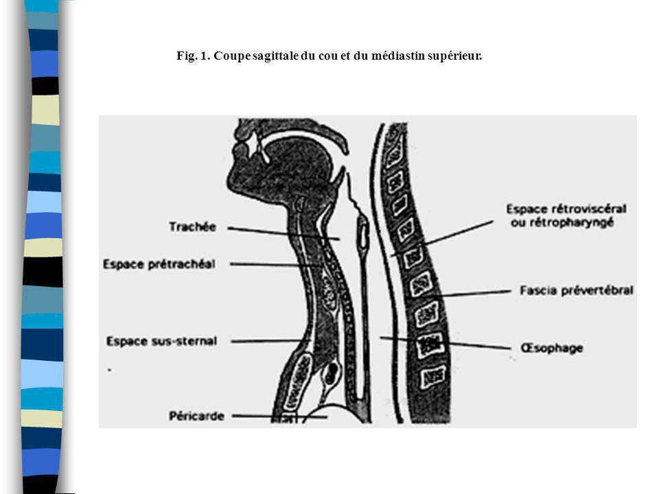 Fig. 1. Coupe sagittale du cou et du médiastin supérieur.