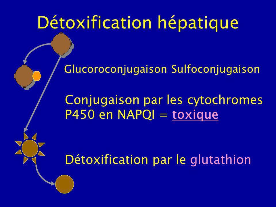 Détoxification hépatique