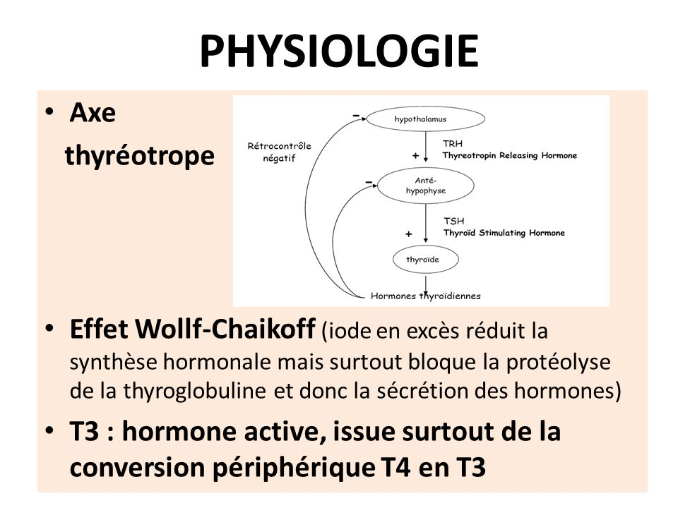 PHYSIOLOGIE Axe thyréotrope