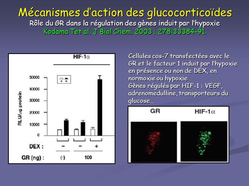 Mécanismes d'action des glucocorticoïdes Rôle du GR dans la régulation des gènes induit par l'hypoxie Kodama Tet al. J Biol Chem. 2003 ; 278:33384-91.