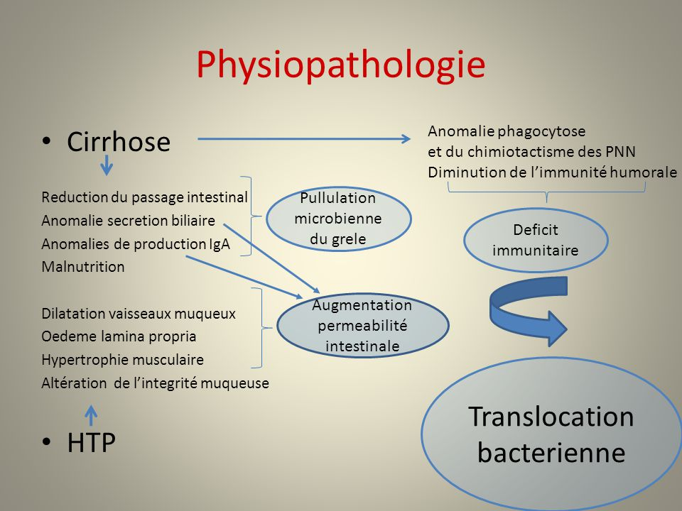 Physiopathologie Cirrhose HTP Translocation bacterienne